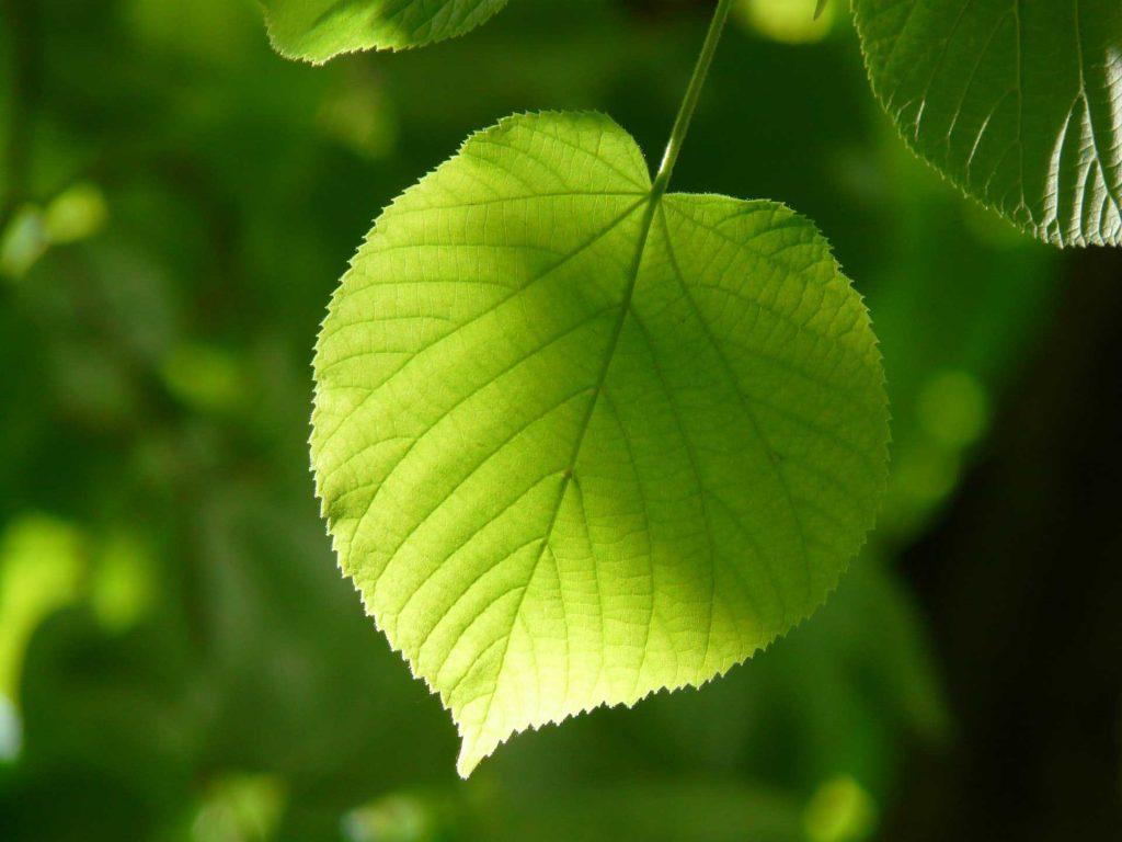 Développement durable | Thérond Décoration à Alès